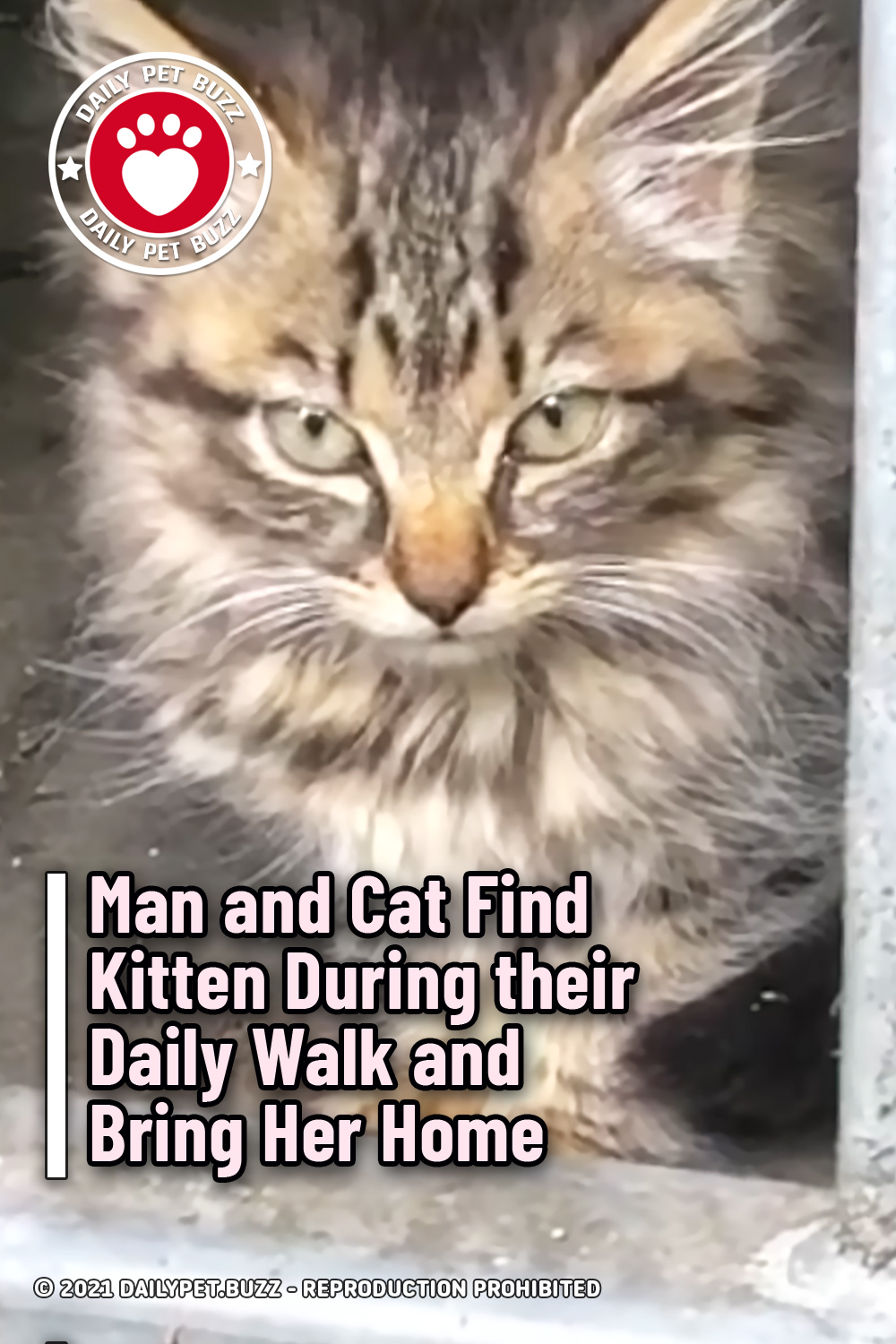 Man and Cat Find Kitten During their Daily Walk and Bring Her Home