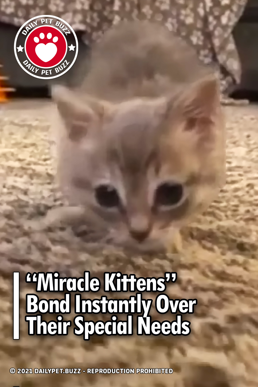 """""""Miracle Kittens"""" Bond Instantly Over Their Special Needs"""