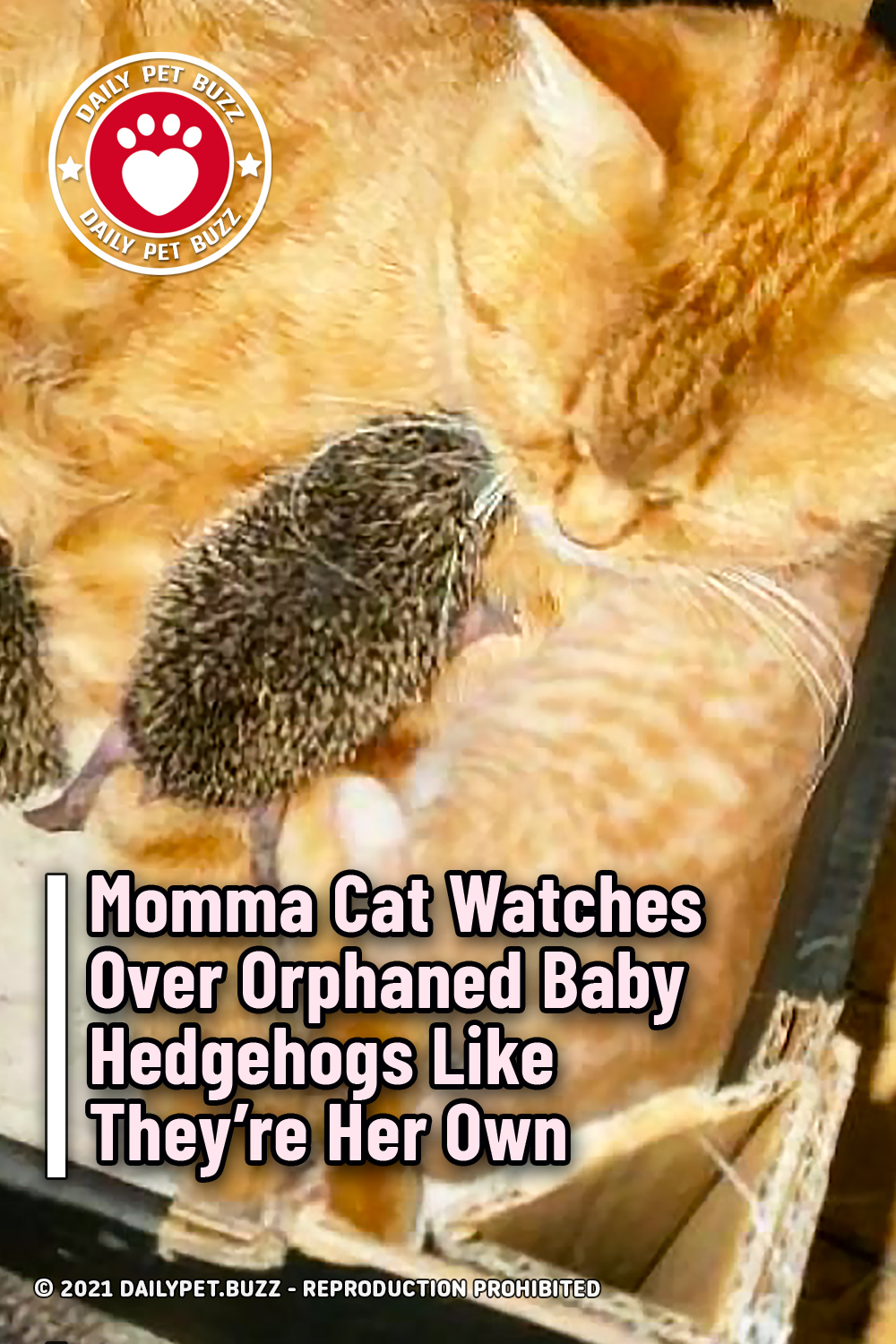 Momma Cat Watches Over Orphaned Baby Hedgehogs Like They're Her Own