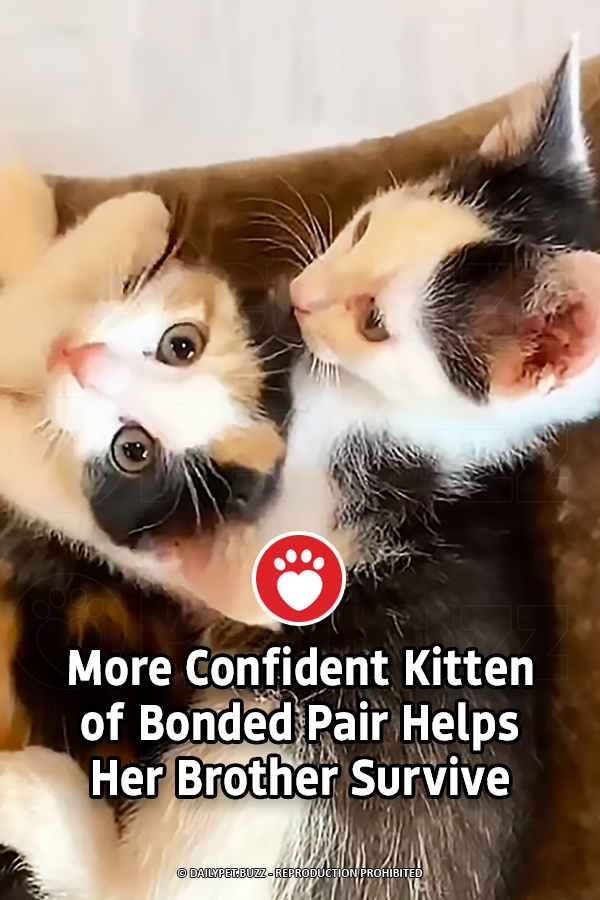 More Confident Kitten of Bonded Pair Helps Her Brother Survive