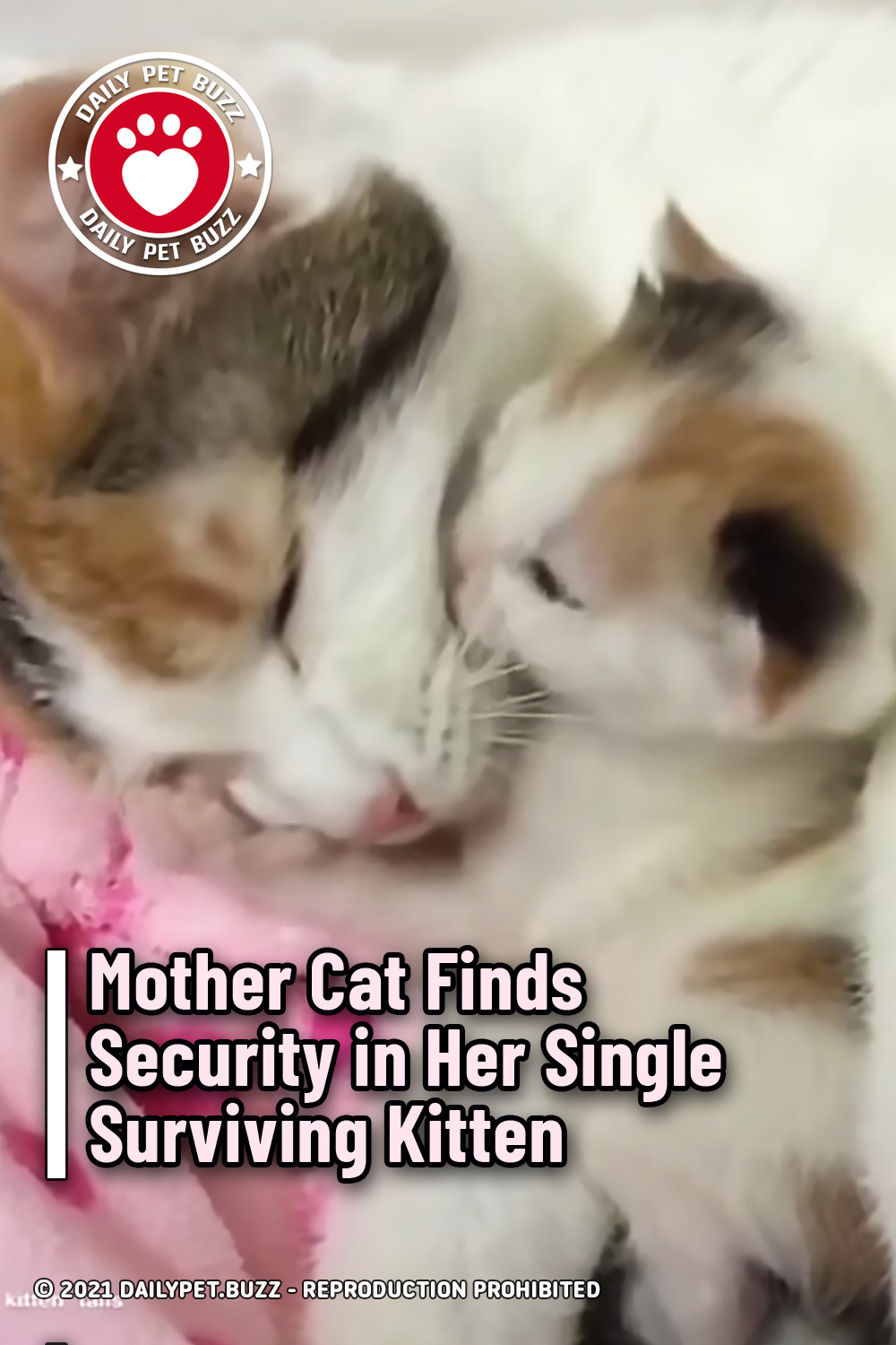 Mother Cat Finds Security in Her Single Surviving Kitten