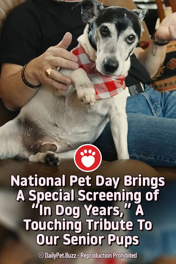 "National Pet Day Brings A Special Screening of ""In Dog Years,"" A Touching Tribute To Our Senior Pups"
