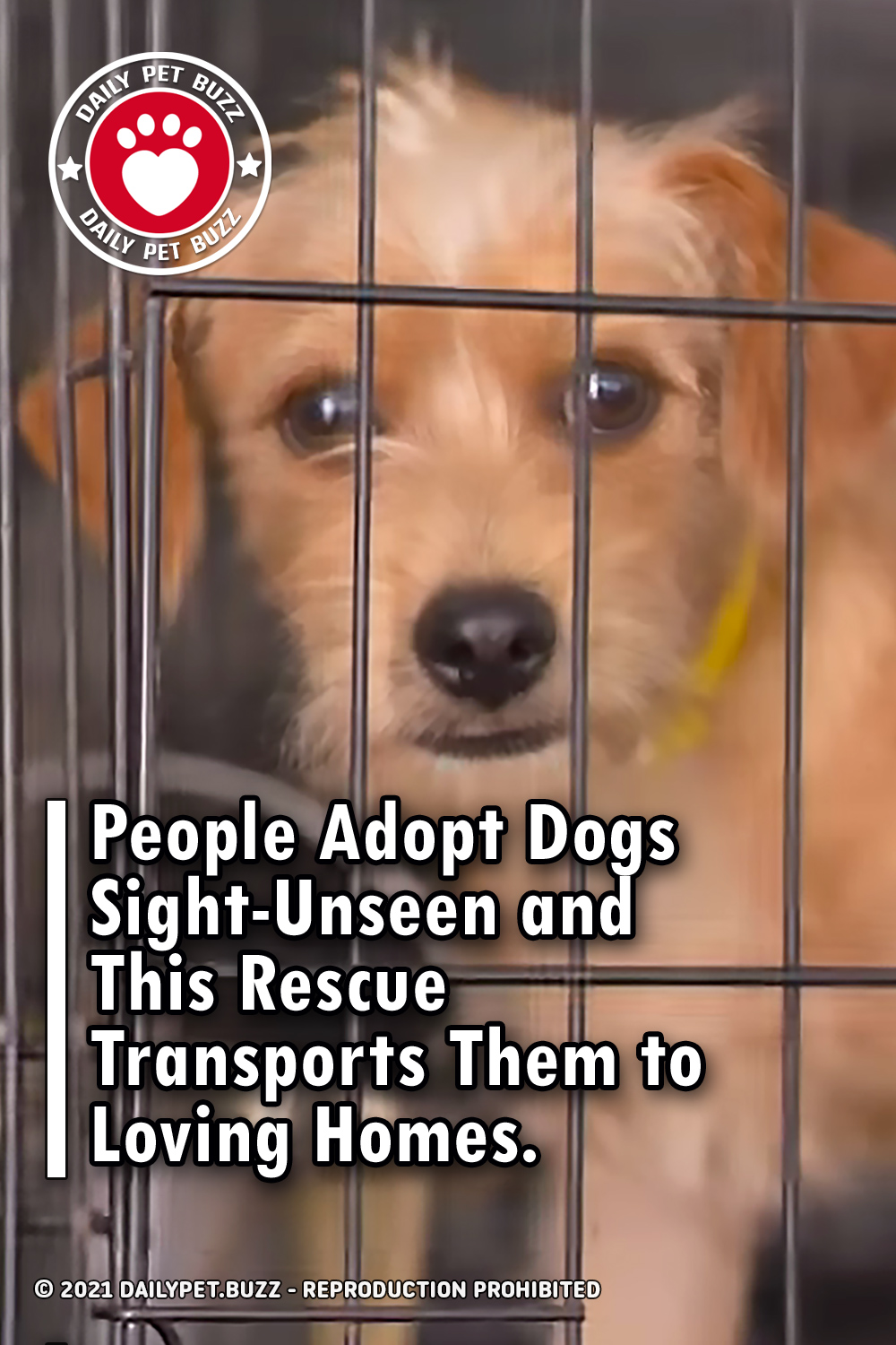 People Adopt Dogs Sight-Unseen and This Rescue Transports Them to Loving Homes.