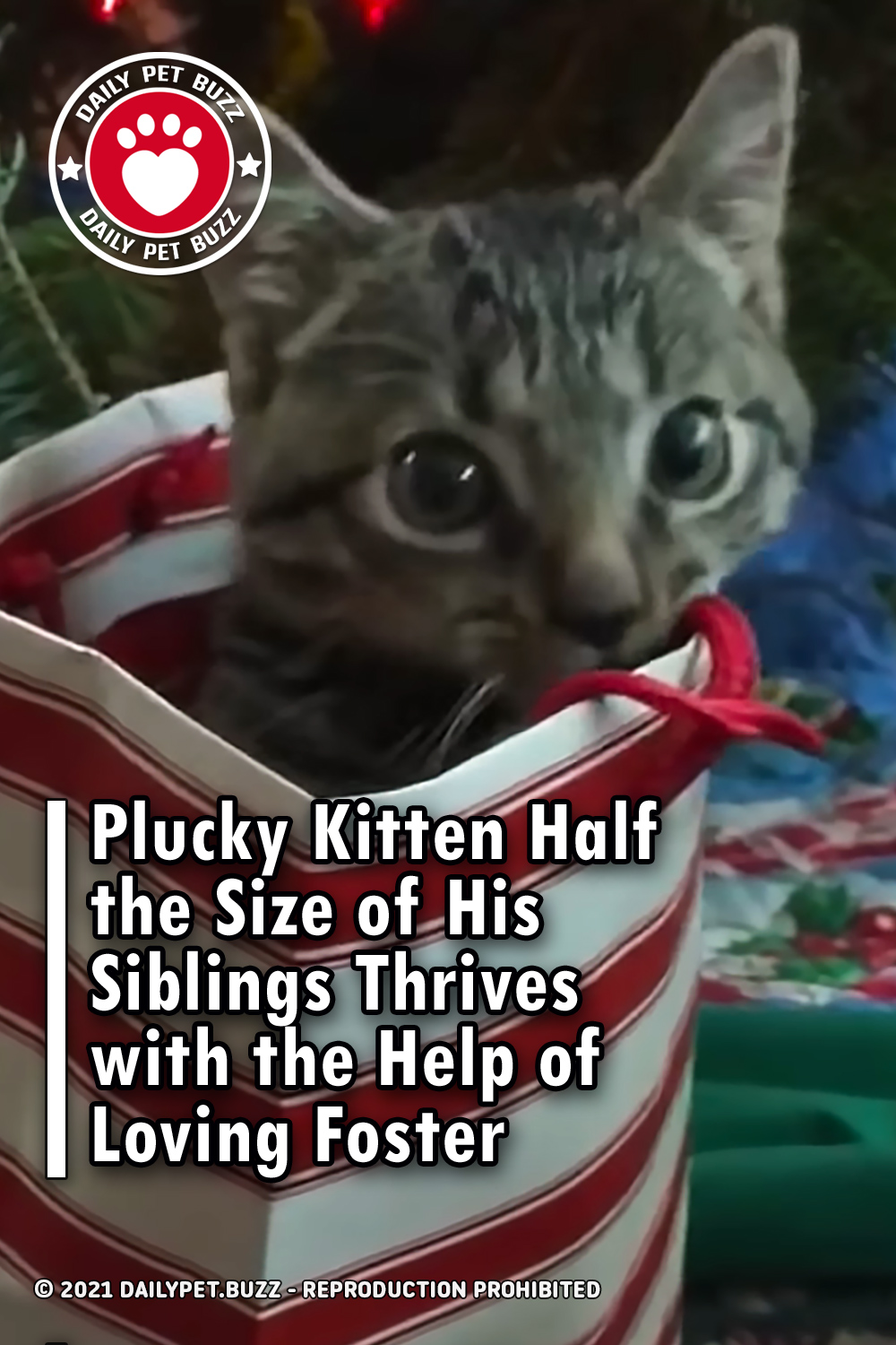 Plucky Kitten Half the Size of His Siblings Thrives with the Help of Loving Foster
