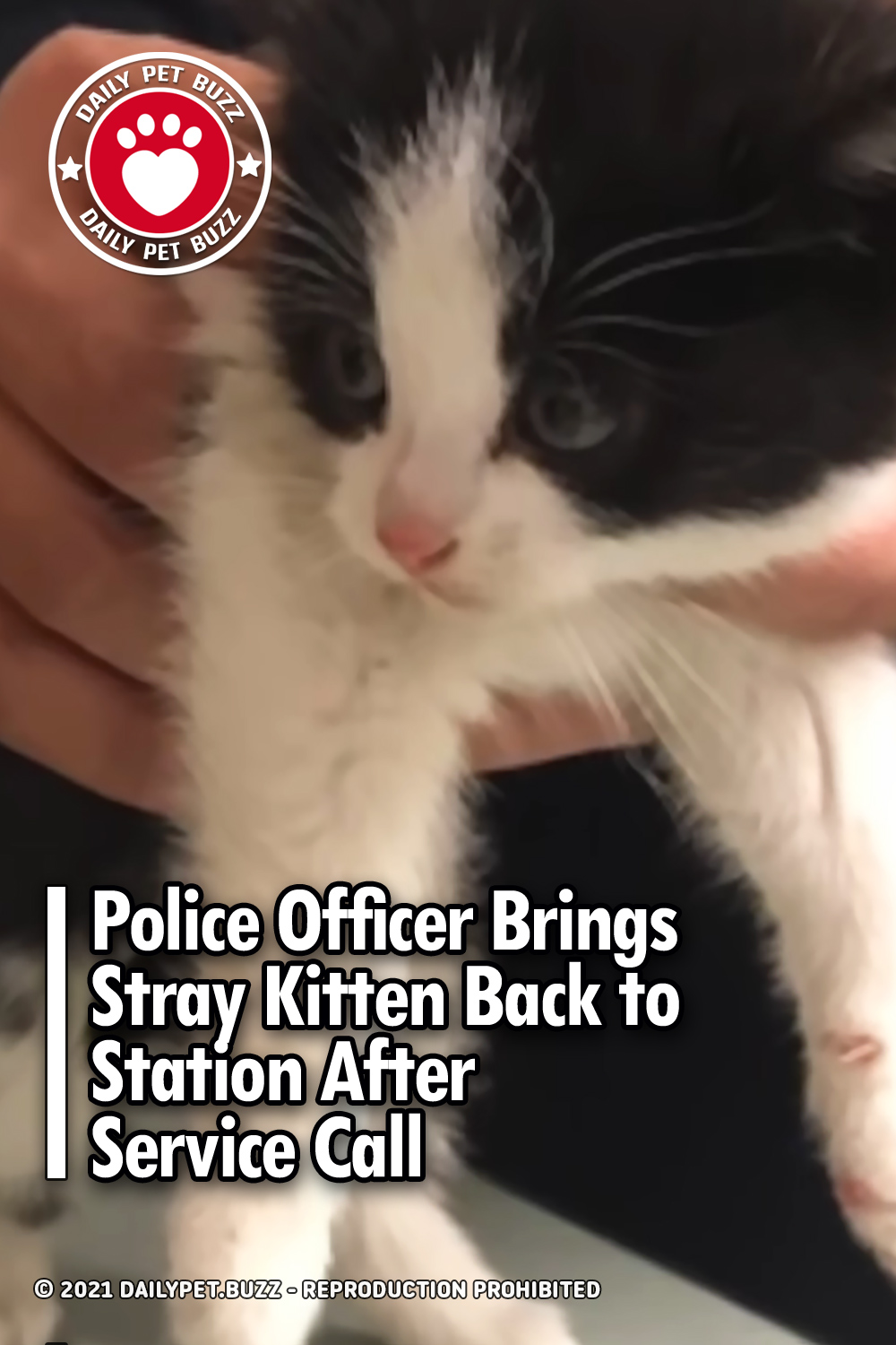 Police Officer Brings Stray Kitten Back to Station After Service Call