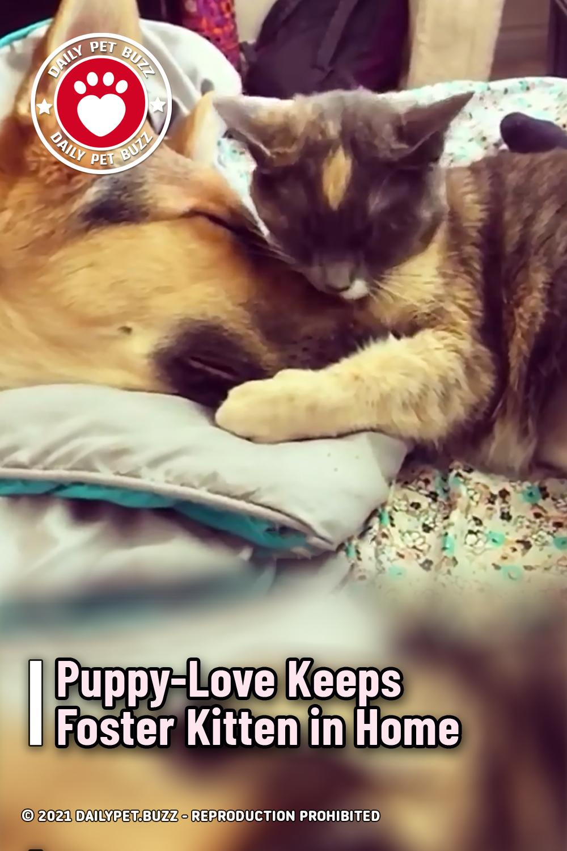 Puppy-Love Keeps Foster Kitten in Home