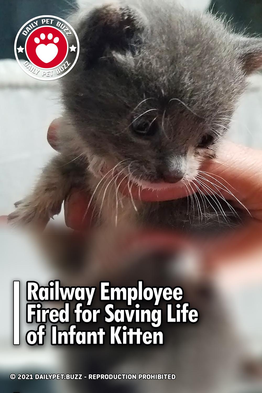 Railway Employee Fired for Saving Life of Infant Kitten