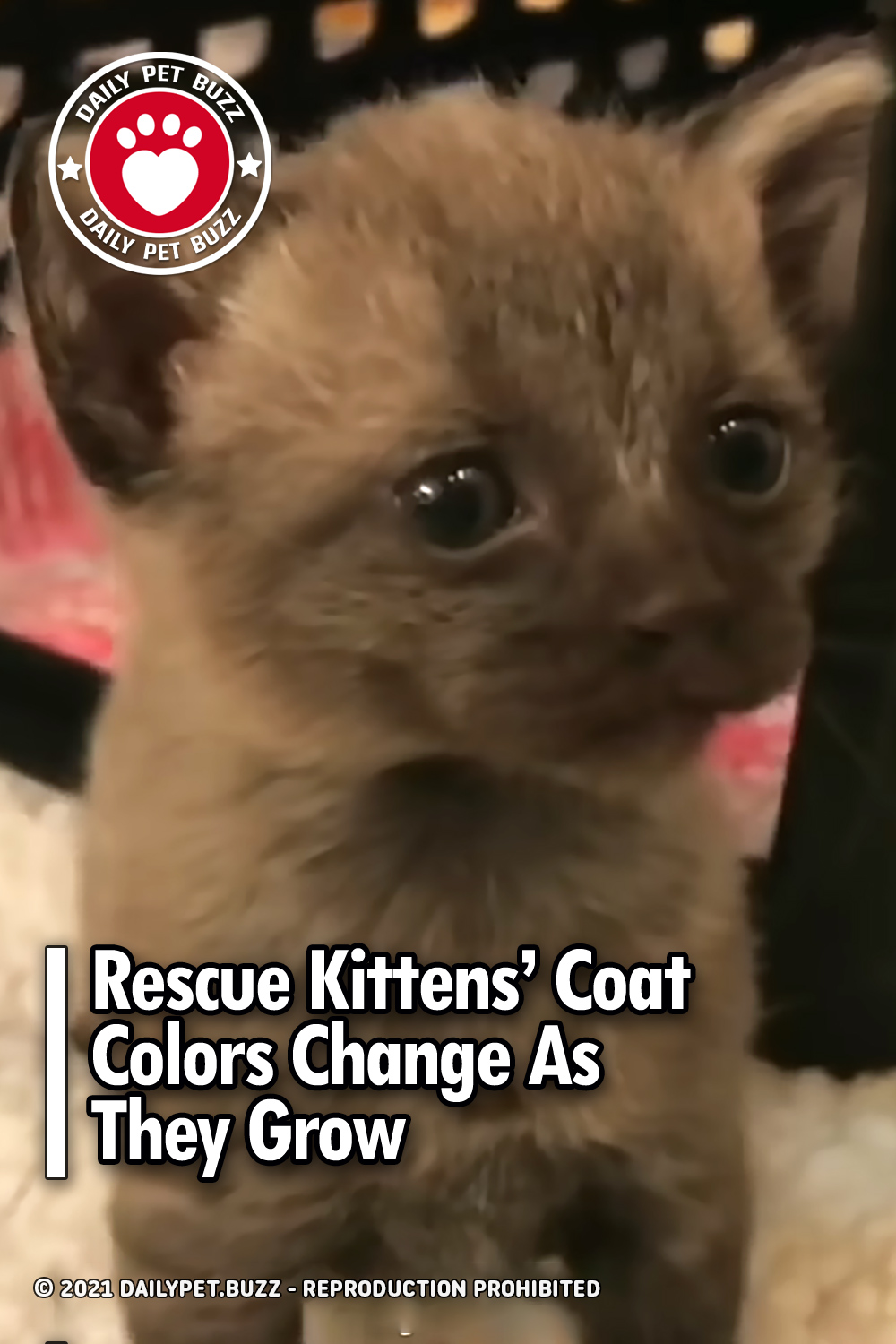 Rescue Kittens' Coat Colors Change As They Grow