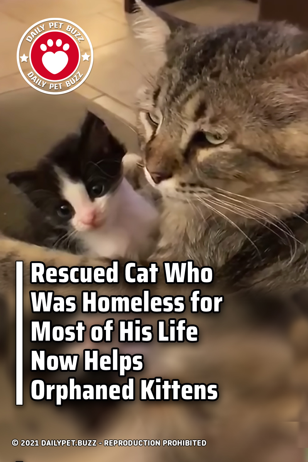 Rescued Cat Who Was Homeless for Most of His Life Now Helps Orphaned Kittens