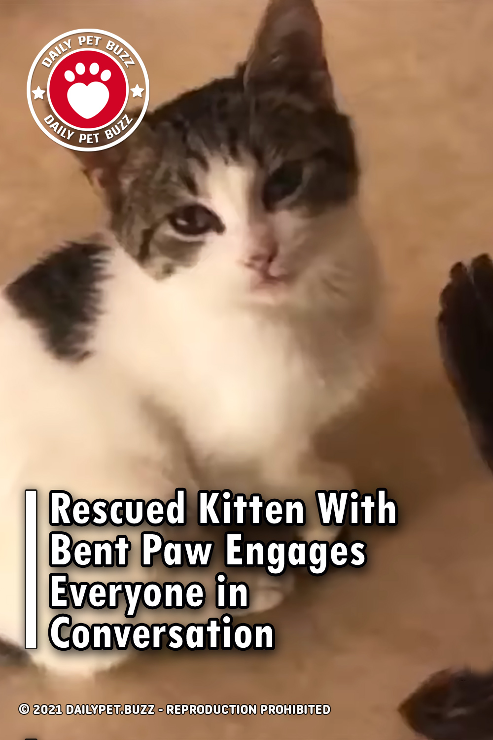 Rescued Kitten With Bent Paw Engages Everyone in Conversation