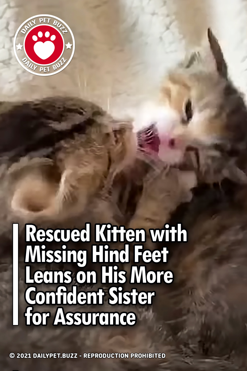 Rescued Kitten with Missing Hind Feet Leans on His More Confident Sister for Assurance