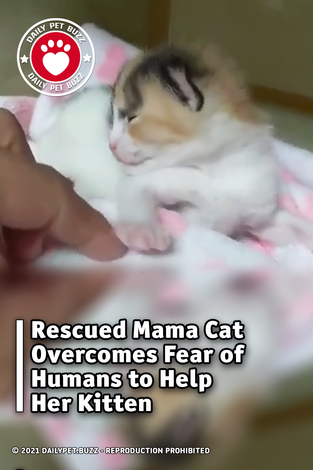 Rescued Mama Cat Overcomes Fear of Humans to Help Her Kitten