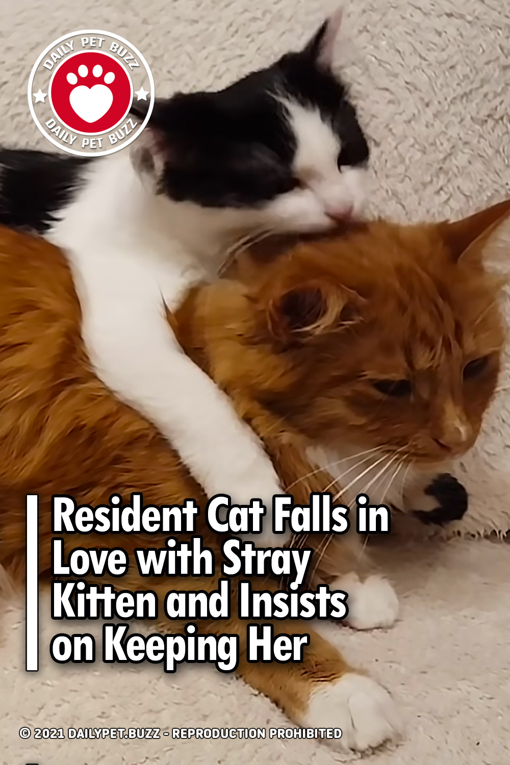 Resident Cat Falls in Love with Stray Kitten and Insists on Keeping Her