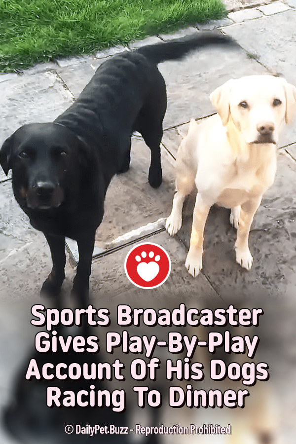 Sports Broadcaster Gives Play-By-Play Account Of His Dogs Racing To Dinner