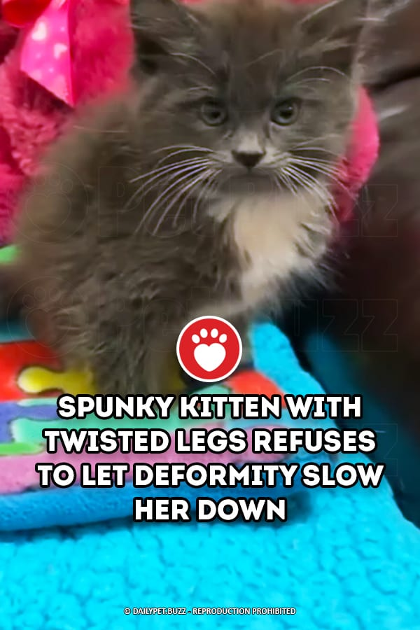 Spunky Kitten with Twisted Legs Refuses to Let Deformity Slow Her Down