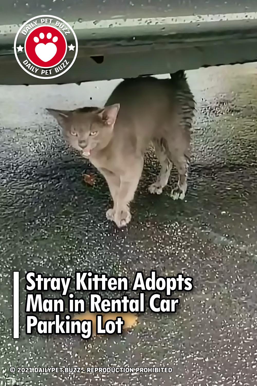 Stray Kitten Adopts Man in Rental Car Parking Lot