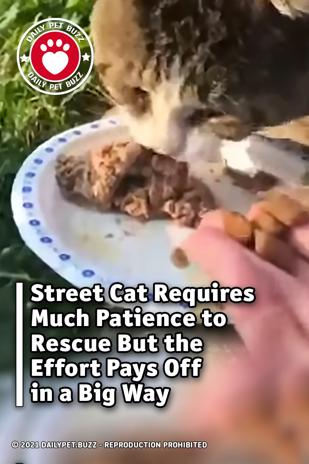Street Cat Requires Much Patience to Rescue But the Effort Pays Off in a Big Way