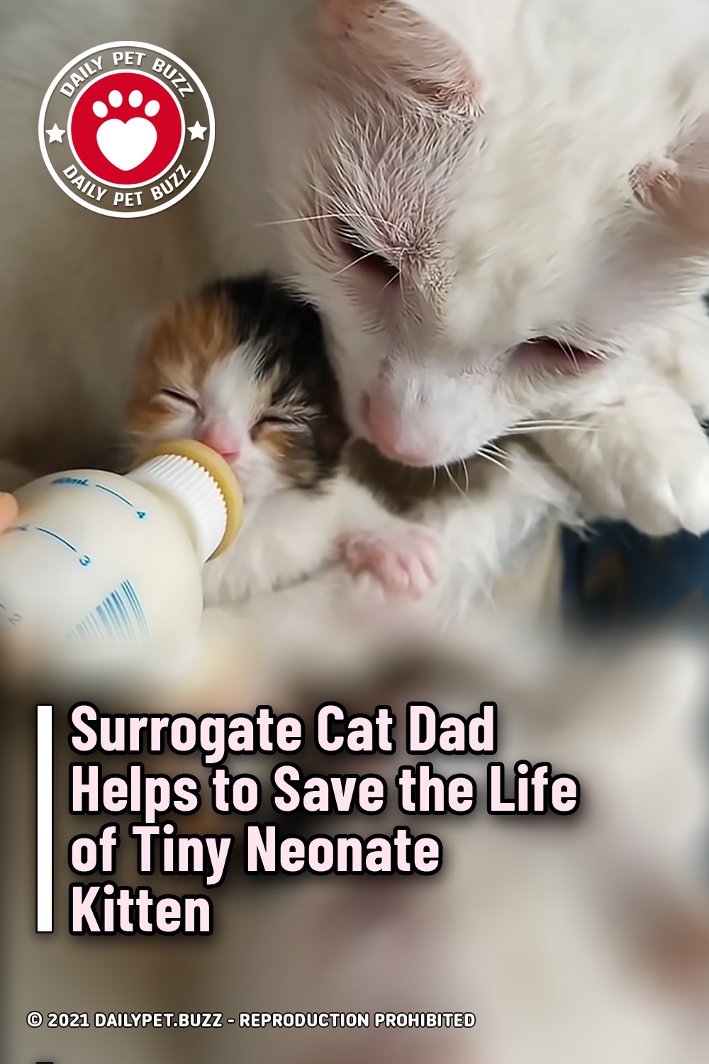Surrogate Cat Dad Helps to Save the Life of Tiny Neonate Kitten