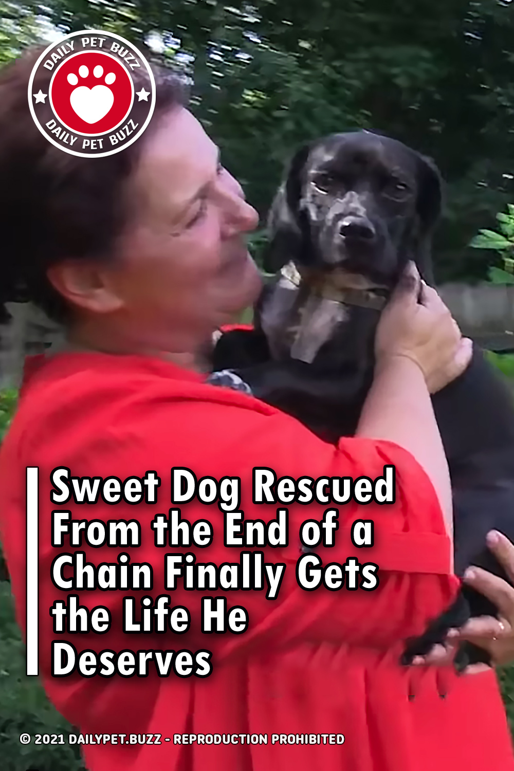Sweet Dog Rescued From the End of a Chain Finally Gets the Life He Deserves