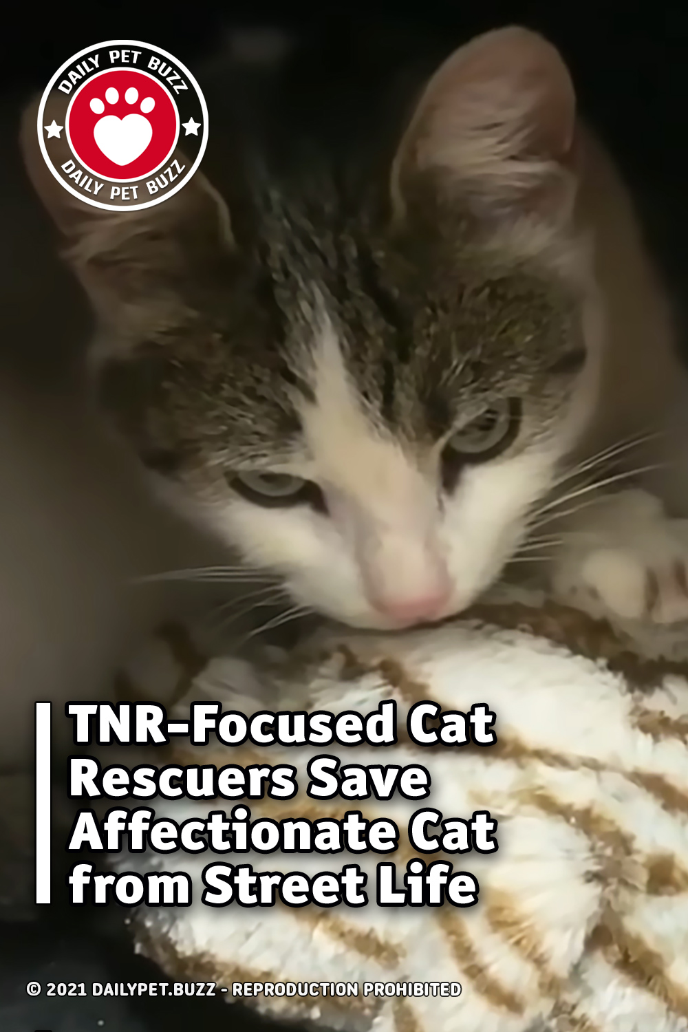 TNR-Focused Cat Rescuers Save Affectionate Cat from Street Life