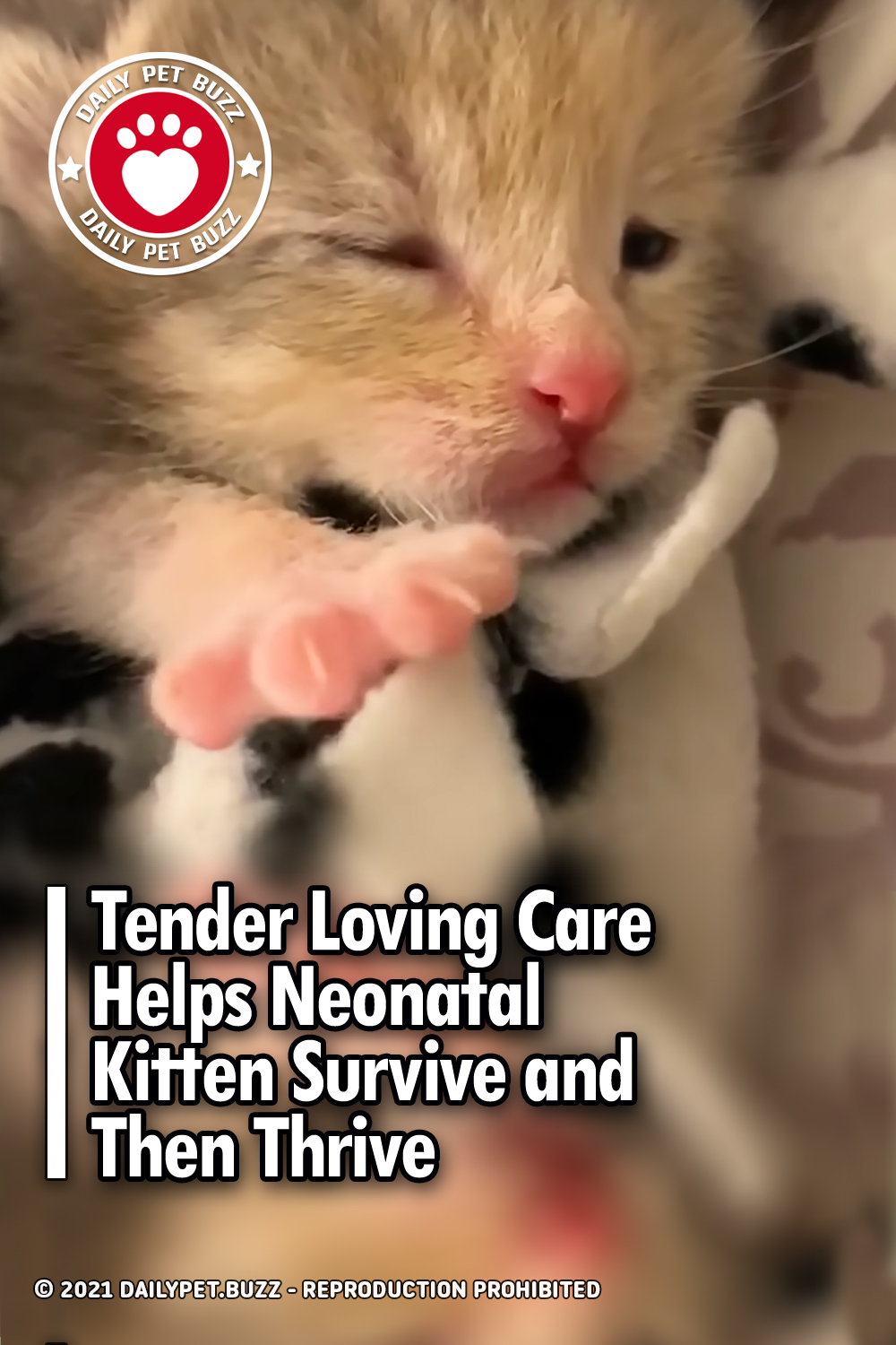 Tender Loving Care Helps Neonatal Kitten Survive and Then Thrive