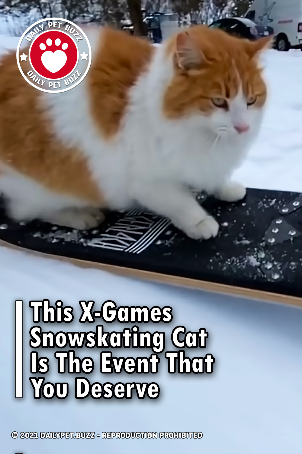 This X-Games Snowskating Cat Is The Event That You Deserve