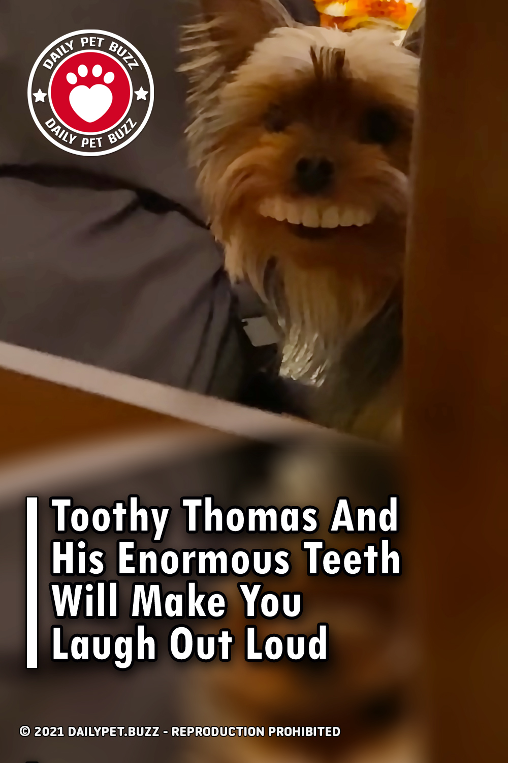 Toothy Thomas And His Enormous Teeth Will Make You Laugh Out Loud
