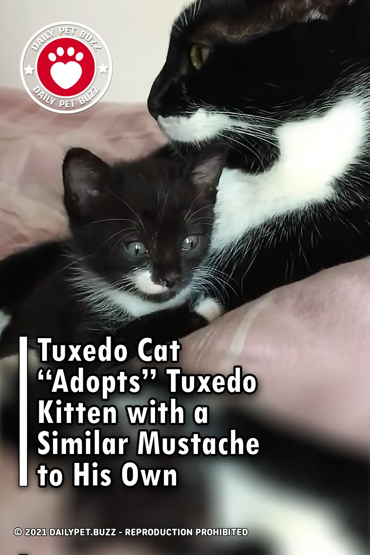 "Tuxedo Cat ""Adopts"" Tuxedo Kitten with a Similar Mustache to His Own"