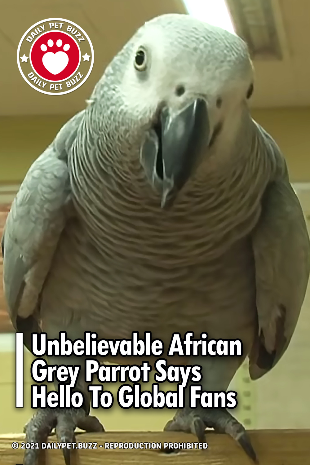 Unbelievable African Grey Parrot Says Hello To Global Fans
