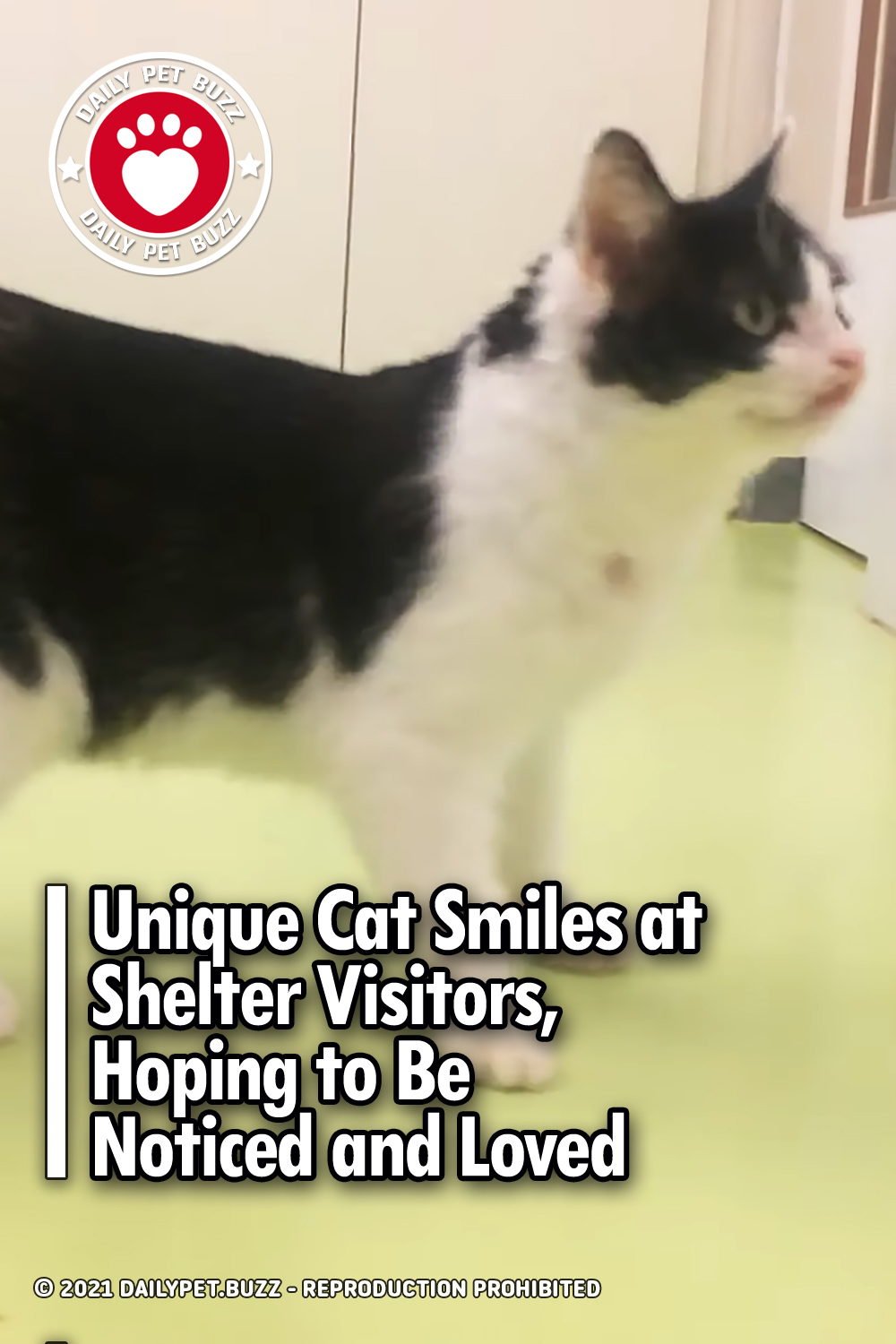 Unique Cat Smiles at Shelter Visitors, Hoping to Be Noticed and Loved