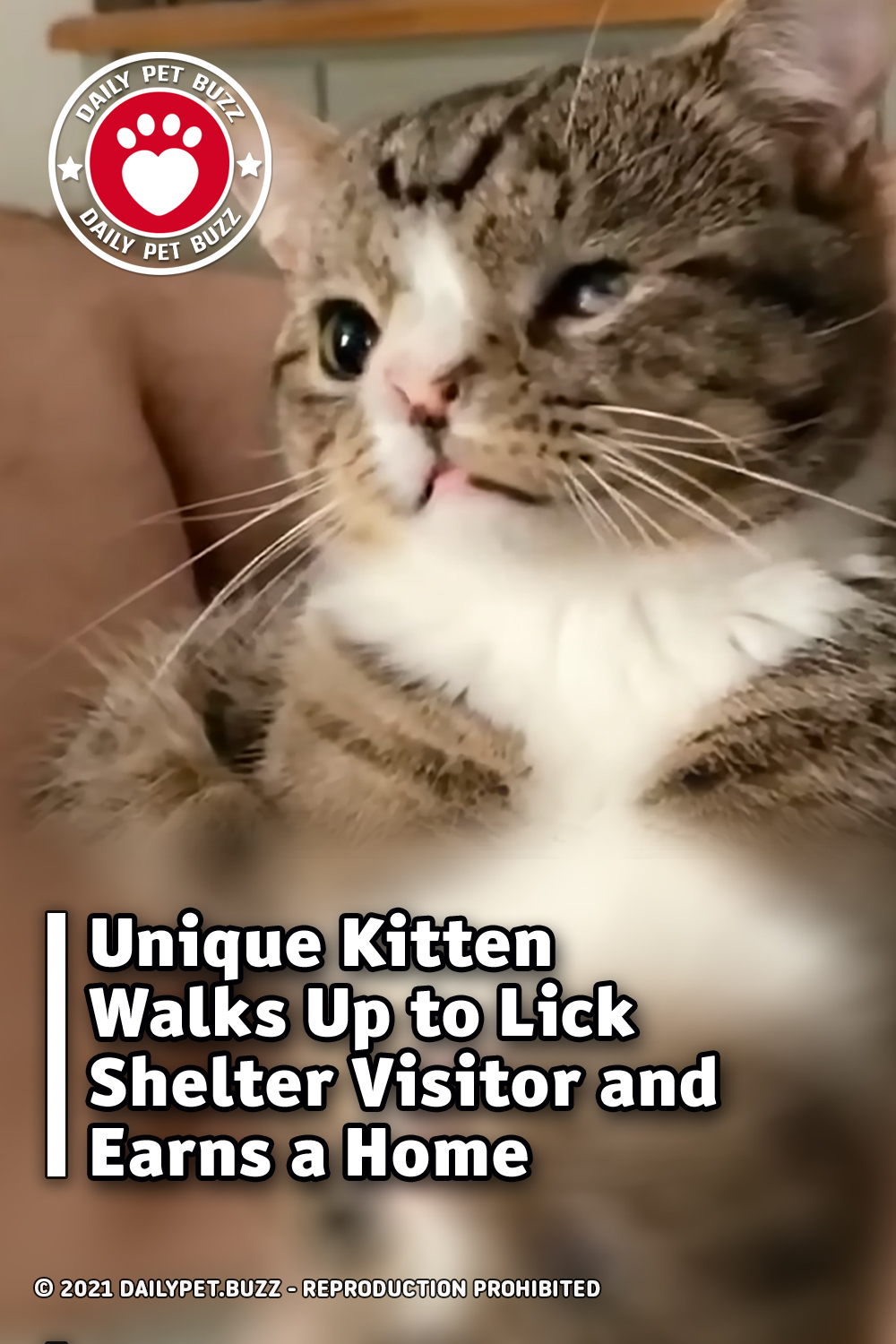 Unique Kitten Walks Up to Lick Shelter Visitor and Earns a Home