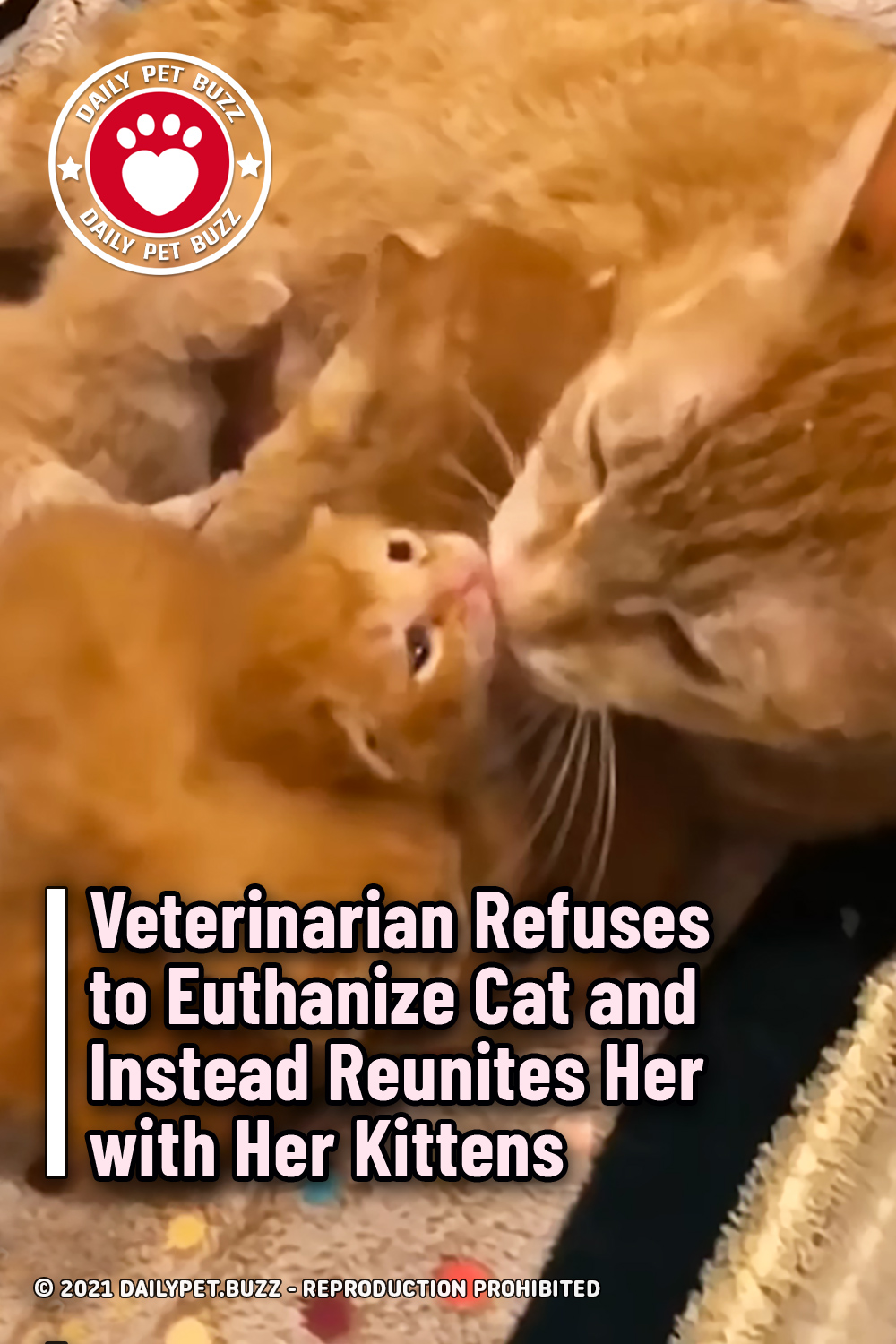 Veterinarian Refuses to Euthanize Cat and Instead Reunites Her with Her Kittens