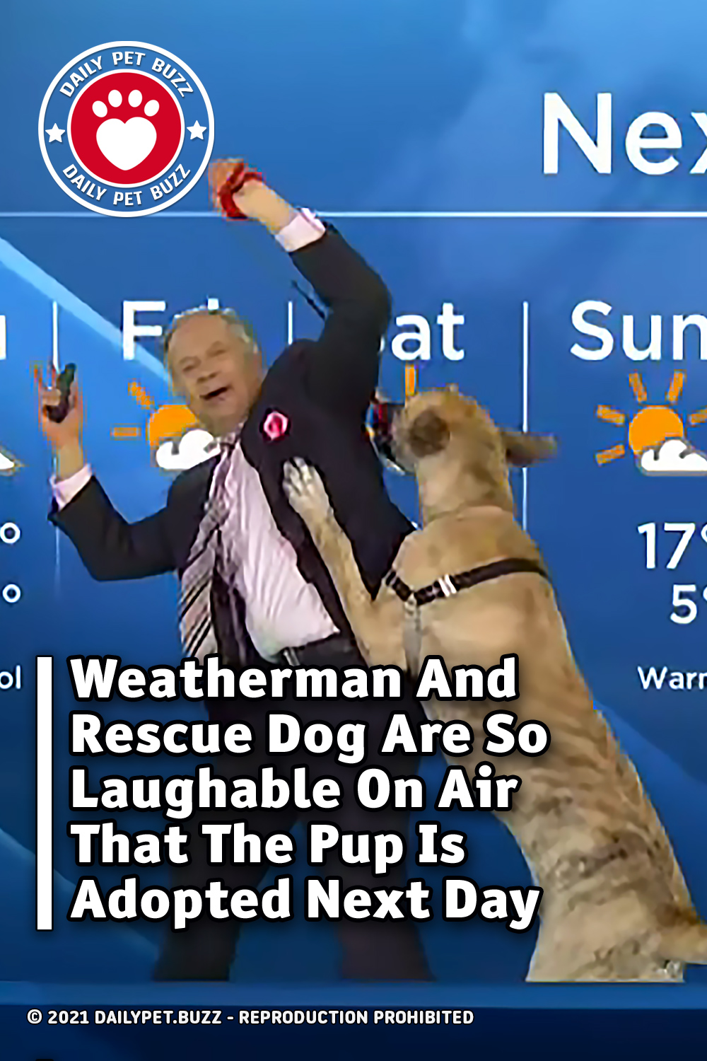 Weatherman And Rescue Dog Are So Laughable On Air That The Pup Is Adopted Next Day