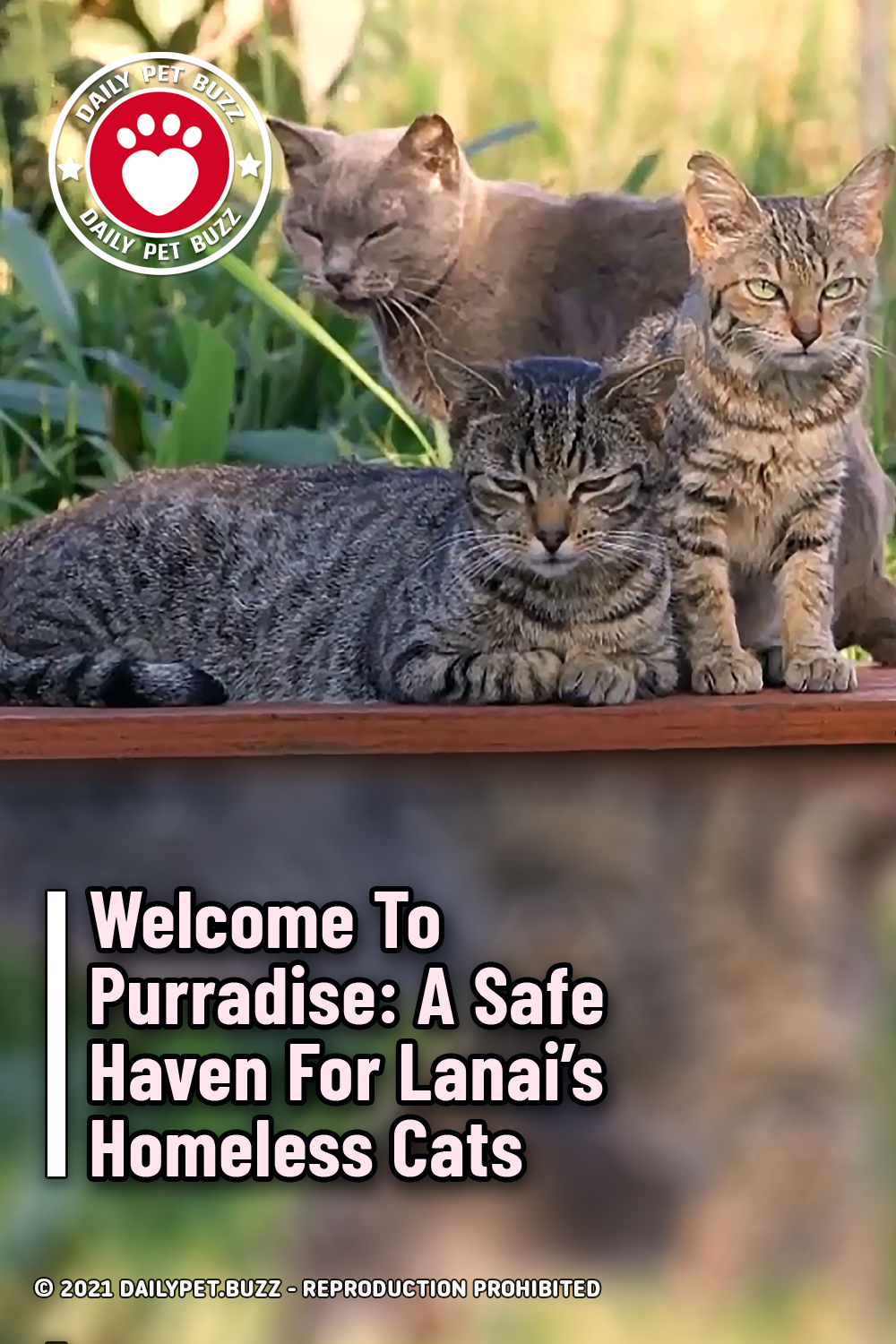 Welcome To Purradise: A Safe Haven For Lanai's Homeless Cats