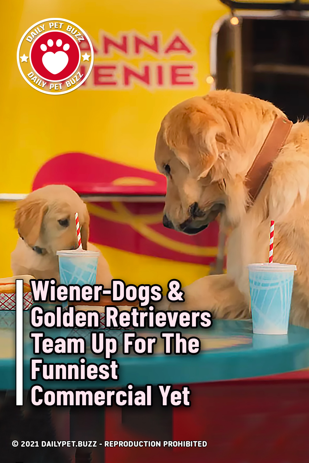 Wiener-Dogs & Golden Retrievers Team Up For The Funniest Commercial Yet