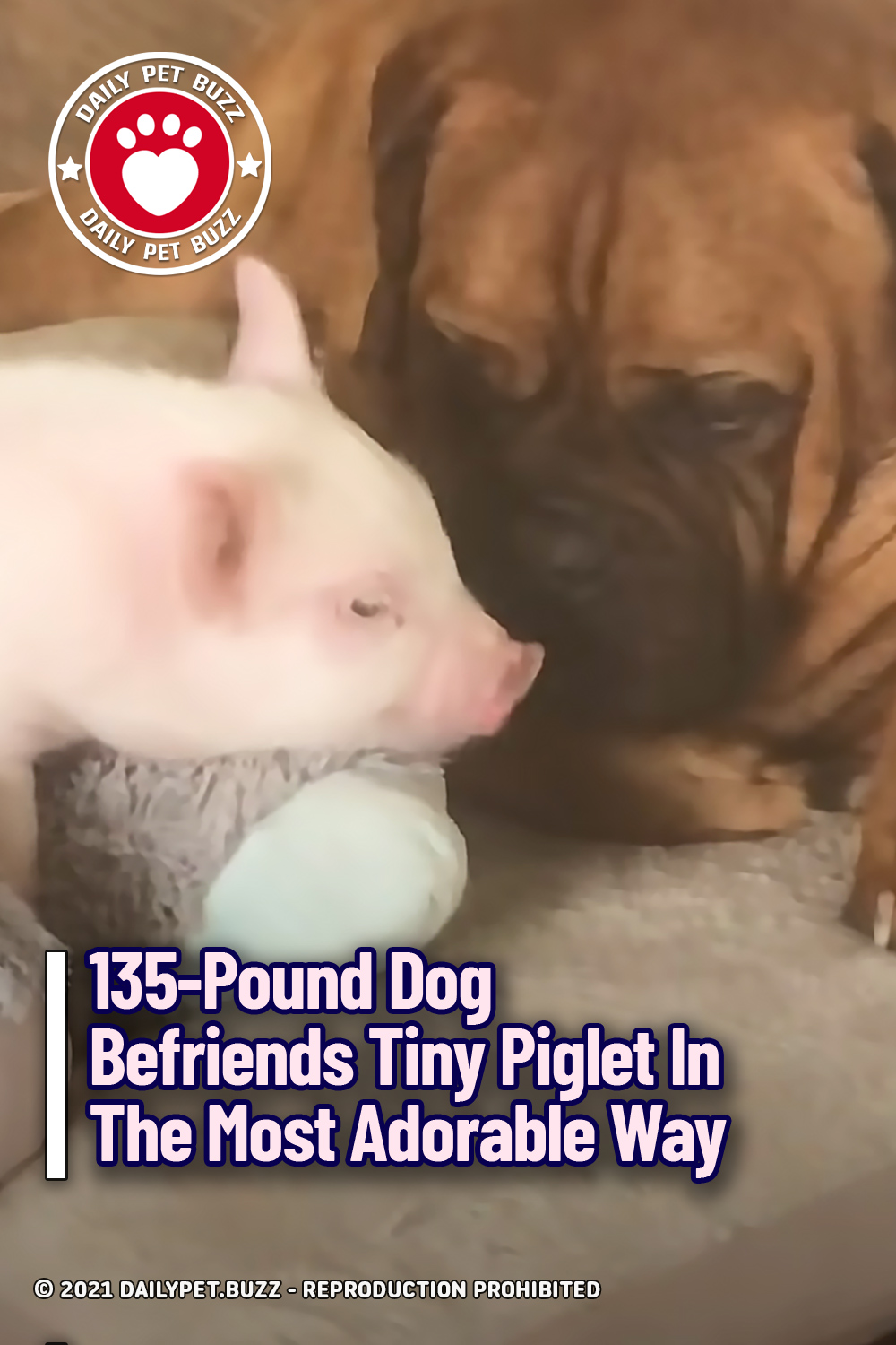 135-Pound Dog Befriends Tiny Piglet In The Most Adorable Way