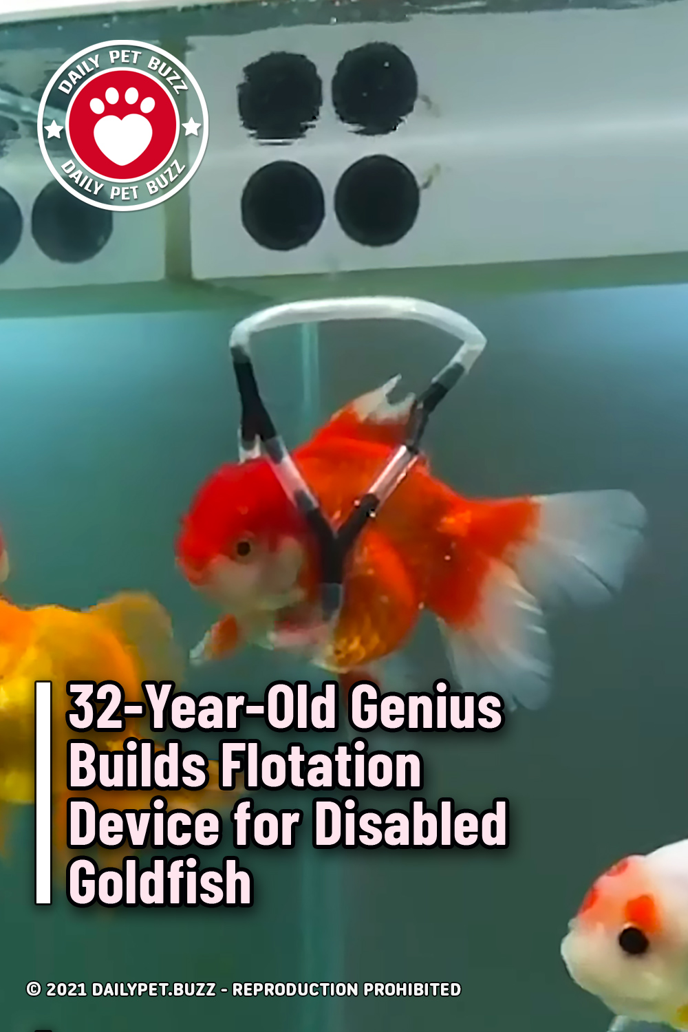 32-Year-Old Genius Builds Flotation Device for Disabled Goldfish