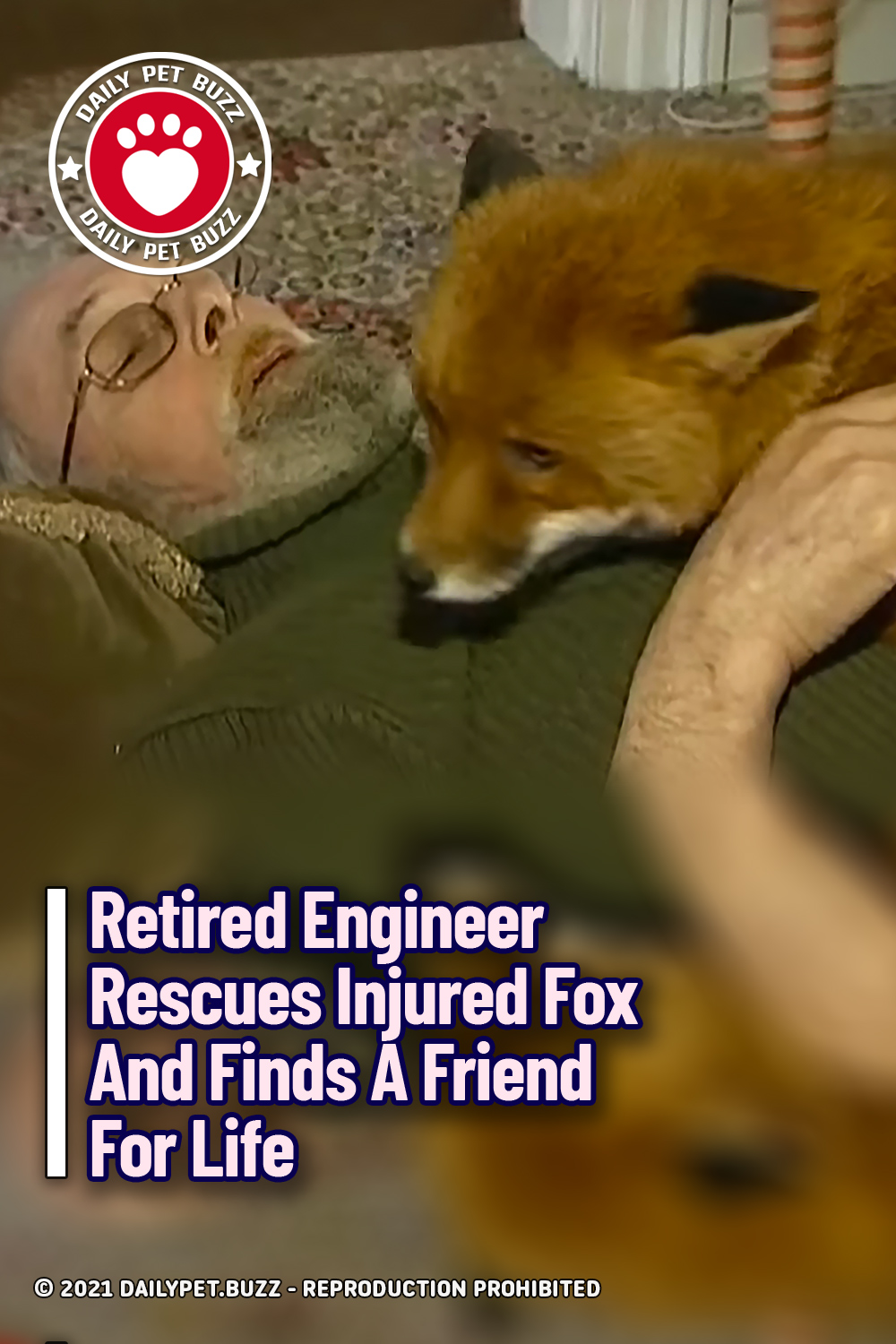 Retired Engineer Rescues Injured Fox And Finds A Friend For Life