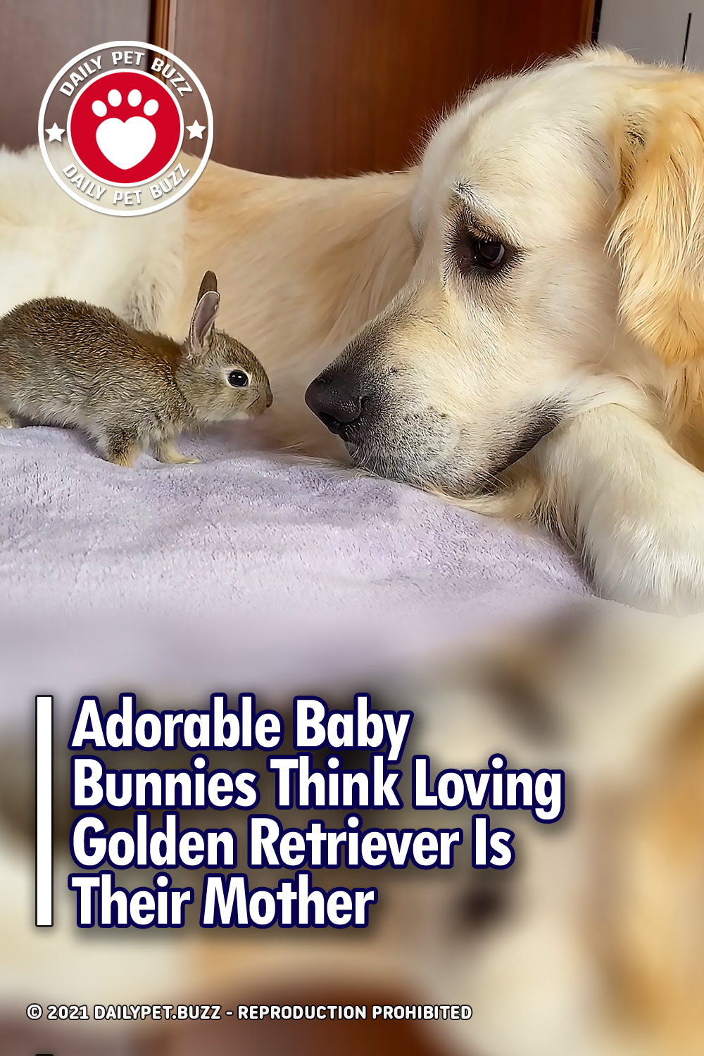 Adorable Baby Bunnies Think Loving Golden Retriever Is Their Mother