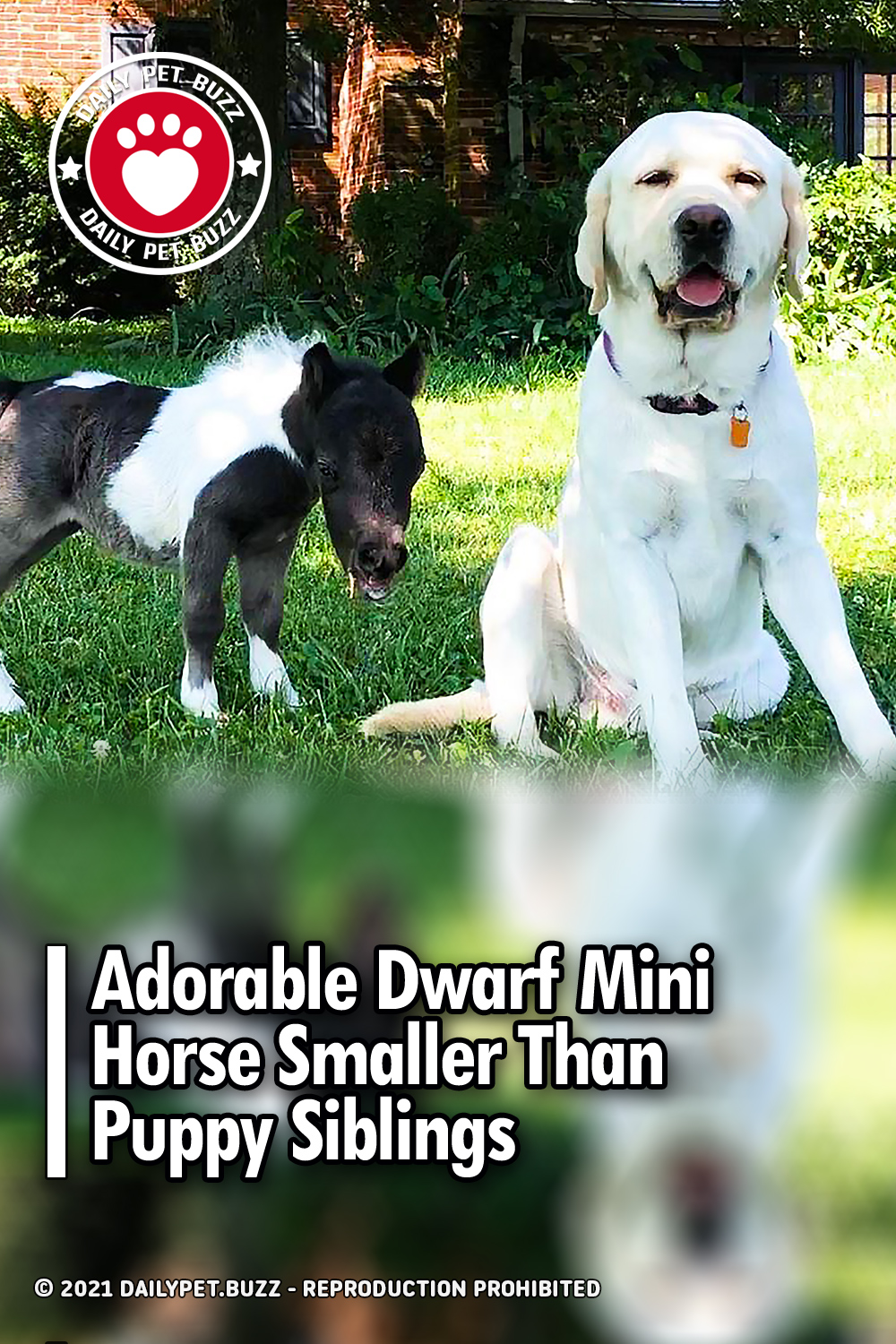 Adorable Dwarf Mini Horse Smaller Than Puppy Siblings