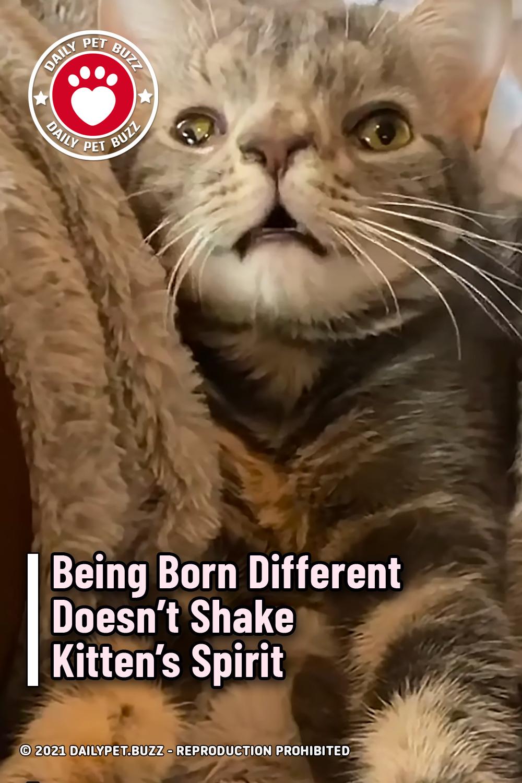 Being Born Different Doesn't Shake Kitten's Spirit