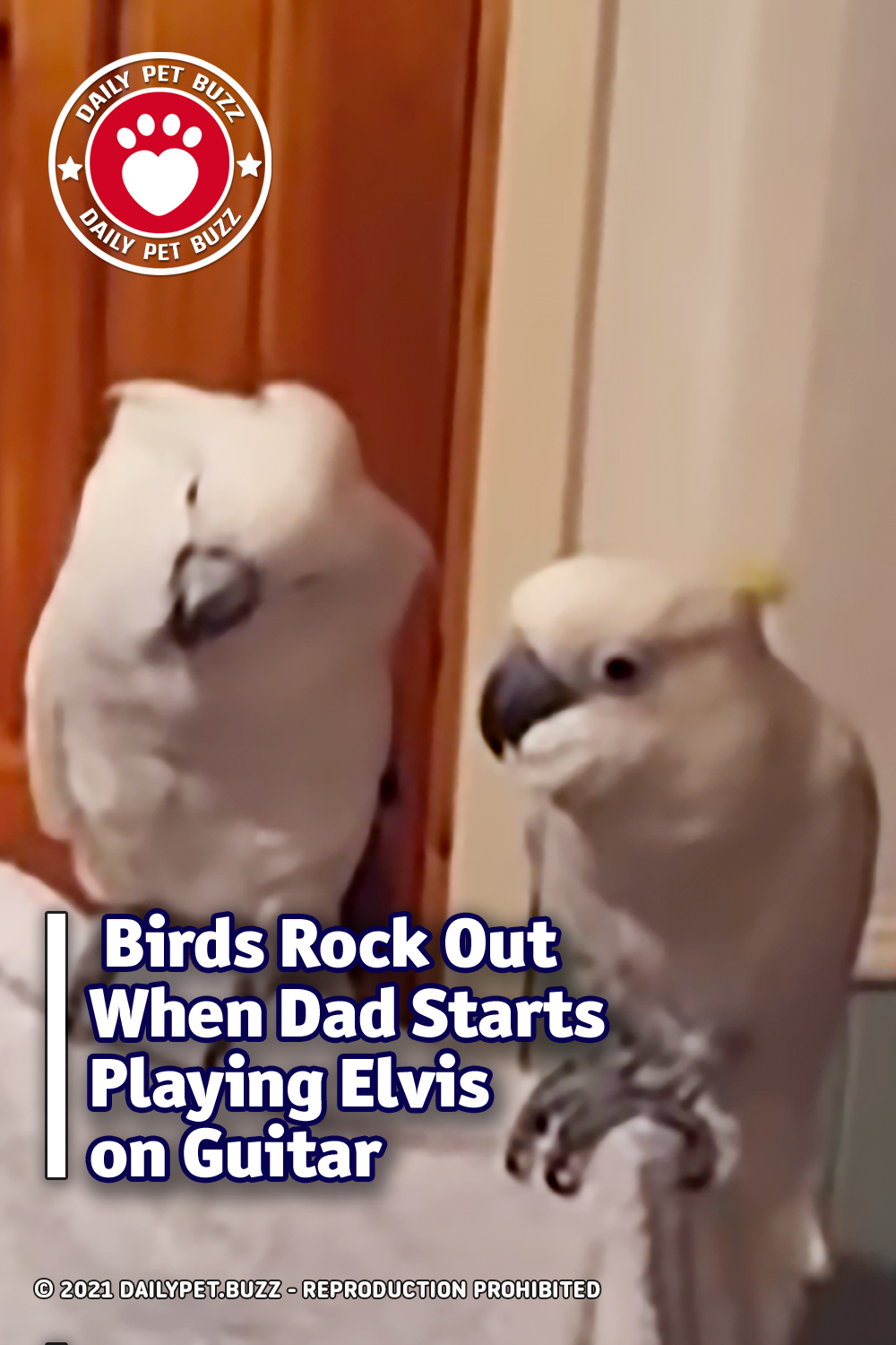 Birds Rock Out When Dad Starts Playing Elvis on Guitar