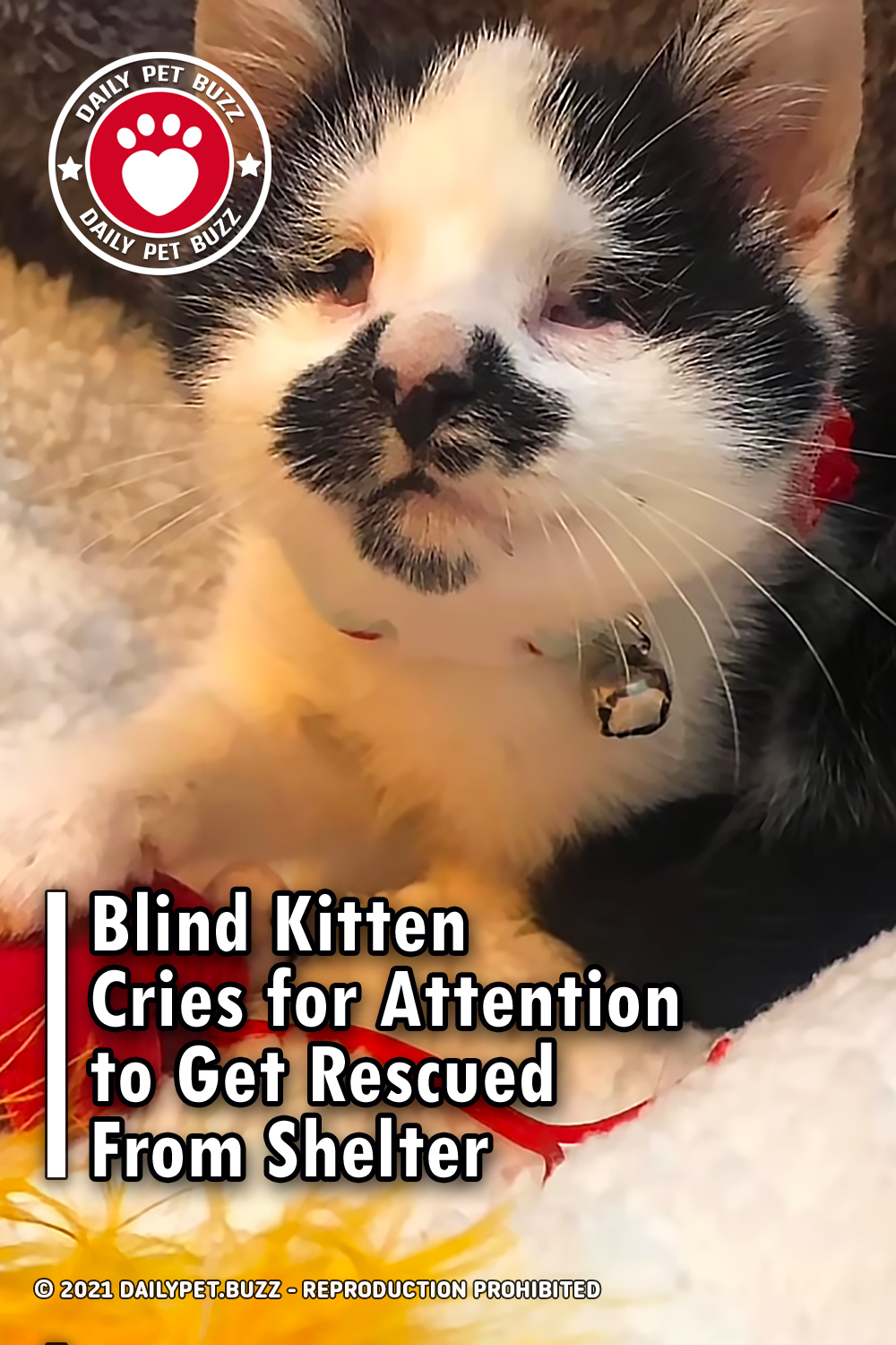 Blind Kitten Cries for Attention to Get Rescued From Shelter