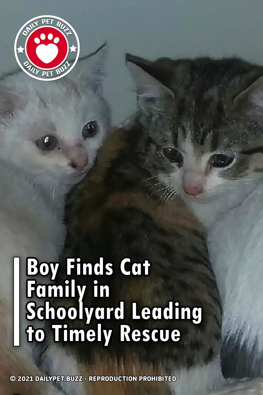 Boy Finds Cat Family in Schoolyard Leading to Timely Rescue