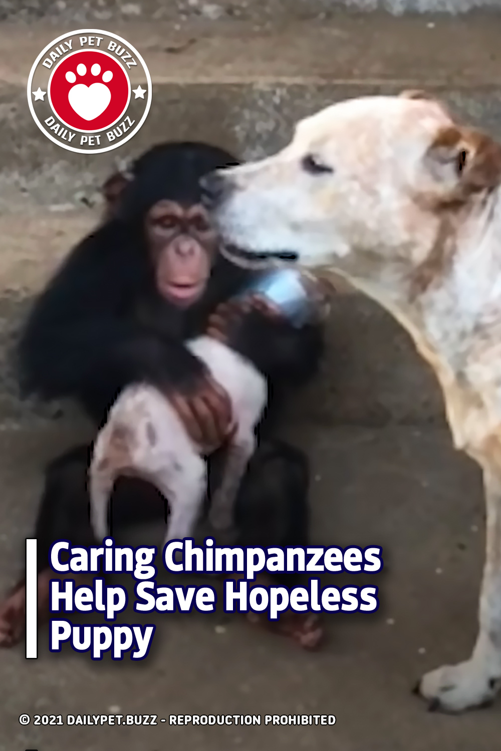 Caring Chimpanzees Help Save Hopeless Puppy