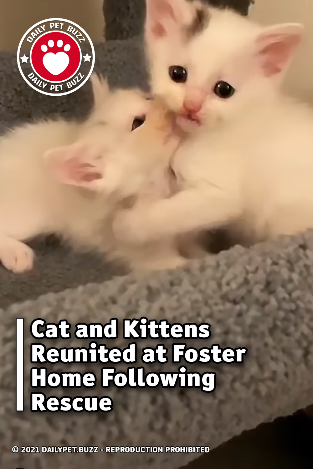 Cat and Kittens Reunited at Foster Home Following Rescue