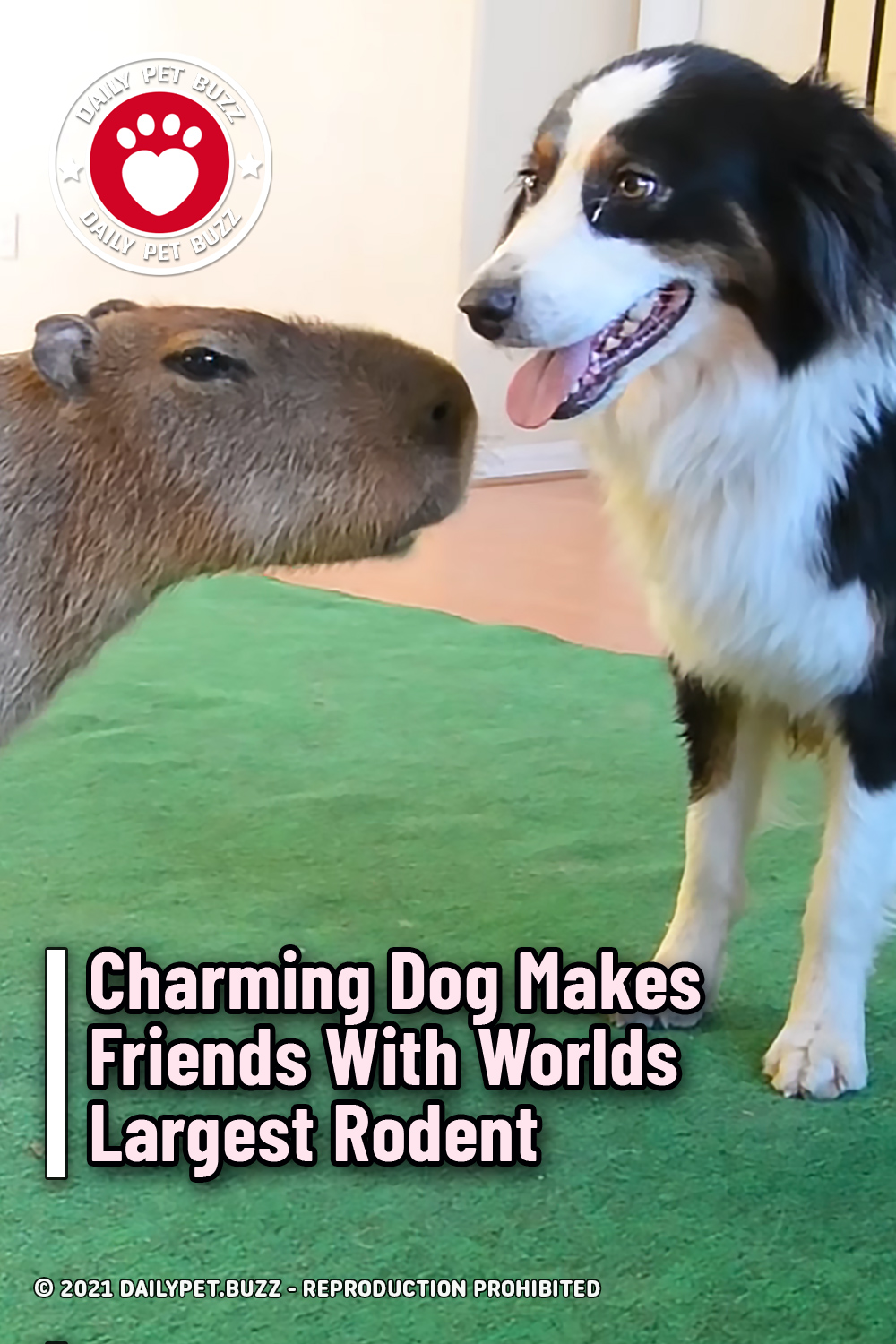 Charming Dog Makes Friends With Worlds Largest Rodent