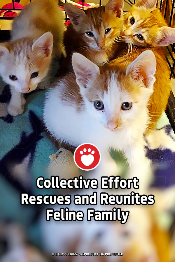 Collective Effort Rescues and Reunites Feline Family