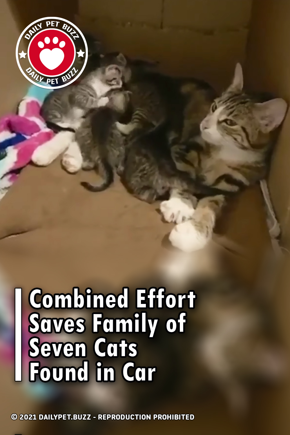 Combined Effort Saves Family of Seven Cats Found in Car