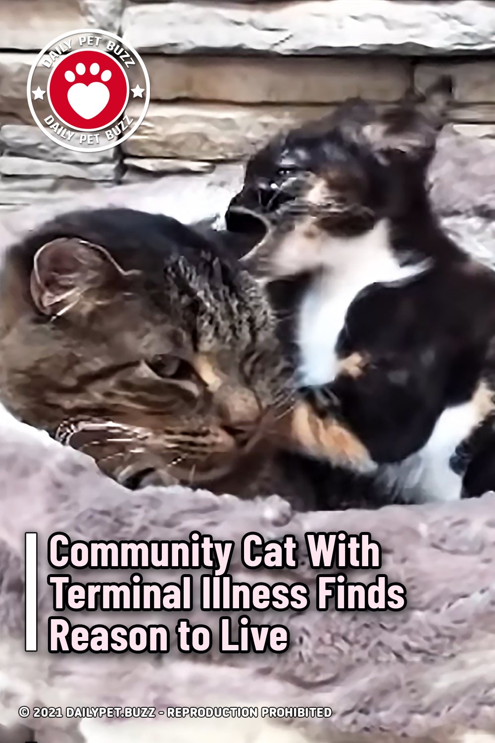 Community Cat With Terminal Illness Finds Reason to Live